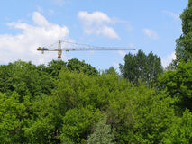 Crane. In a forest Stock Images