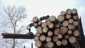 Crane arm lifts up wood logs from truck at sawmill. On cloudy cold winter day, slow motion stock video