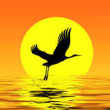 Crane on the background of the moon. Silhouette syringes soaring above the water. Beautiful reflection of the moon.The bird flies away to the south Royalty Free Stock Image