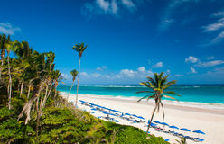 Crane Beach. Is one of the most beautiful beaches on the Caribbean island of Barbados. It is a tropical paradise with palms hanging over turquoise sea Royalty Free Stock Photo