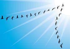 Crane bird flock against blue sky Royalty Free Stock Photo