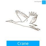 Crane bird learn birds coloring book vector. Crane bird learn birds educational game coloring book vector illustration Royalty Free Stock Photography