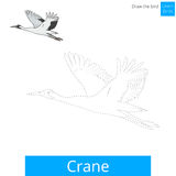 Crane bird learn to draw vector Stock Photography