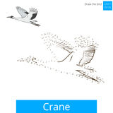Crane bird learn to draw vector. Crane learn birds educational game learn to draw vector illustration Stock Images