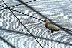 Crane bird. Stop on a barb roofs Royalty Free Stock Photos