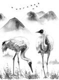 Crane Birds bianco sul fondo della montagna Fotografie Stock