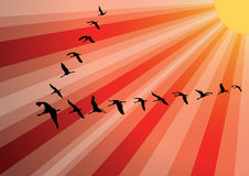 Crane birds flock against sunset. Stock Photography
