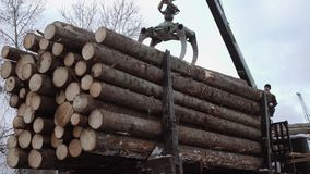 Crane claw loader unloads wood logs from heavy truck at sawmill production. Cold cloudy winter day stock footage
