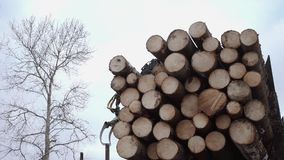 Crane claw unloads lumber logs from truck at sawmill. On cloudy cold winter day, slow motion stock footage
