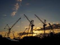 Crane Evening landskap royaltyfri bild