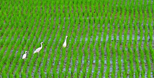 Crane in the field Stock Images