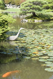 Crane and fish in Japanese garden Stock Photo