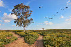 Crane flock over the blossoming field Stock Photos