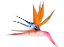 Crane Flower Royalty-vrije Stock Foto's