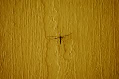 Crane fly or daddy longlegs on yellow background Royalty Free Stock Photo