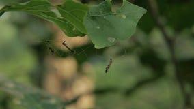 Crane fly hanging. stock video