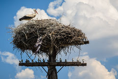A stork in his nest royalty free stock photography