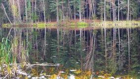 Crane il tiro di bei foresta e lago selvaggi stock footage