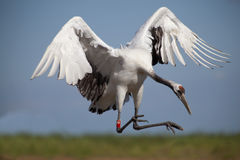 Free Crane In Sky Stock Photos - 15666053