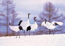 Crane In Winter Stock Photo