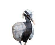 Crane  isolated on white Stock Photo