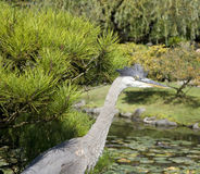Crane in Japanese garden Royalty Free Stock Photos