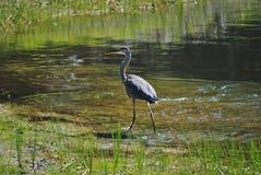 Crane by a lake Stock Image