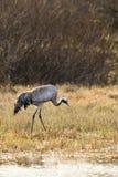 Crane at a lake Stock Photos