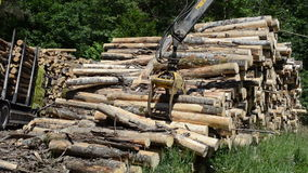 Crane load wood logs. Two crane with metal claws loading heavy timber logs wood to trailer truck for transportation stock footage