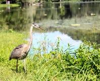Crane on the Mississippi Stock Photo