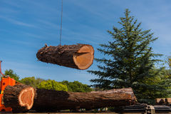 Crane moves large section of  Redwood tree Royalty Free Stock Photo