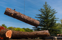Crane moves large section of  Redwood tree Royalty Free Stock Images