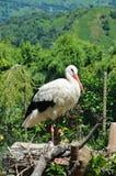 A crane in the nest Stock Photos