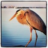 Crane. On the pier Stock Photos