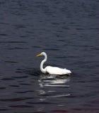 crane połowów Fotografia Royalty Free