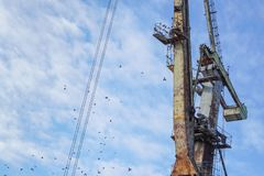 Crane on port. With blue sky in background Royalty Free Stock Photography