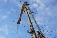 Crane on port. With blue sky in background Stock Images