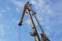 Crane on port with a flock of birds.  Royalty Free Stock Photo