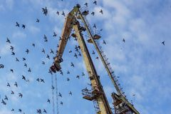 Crane on port with a flock of birds.  Royalty Free Stock Photos