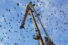 Crane on port with a flock of birds.  Royalty Free Stock Images