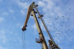 Crane on port with a flock of birds.  Stock Photography
