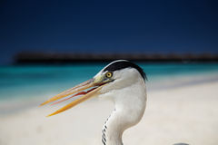 Crane posing on the beach! Stock Photography