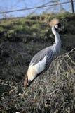 Posing crane stock images