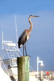 A crane on a post. A crane standing tall on a post at the harbor Royalty Free Stock Images
