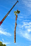 Crane Removing Palm Tree Royalty-vrije Stock Foto's