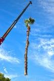 Crane Removing Palm Tree Photos libres de droits