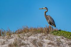 The Crane on the Sand Dunes Royalty Free Stock Image
