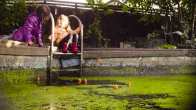 Two girls playing near the old pool overgrown with duckweed. Crane shot. Two girls playing near the old pool overgrown with duckweed. A girl catching orange stock video footage