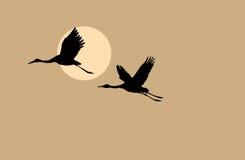 Crane silhouette. On solar background,  illustration Royalty Free Stock Image