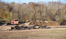 Crane Stacks Fresh Cut Trees Imágenes de archivo libres de regalías
